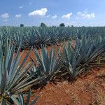 History of Tequila